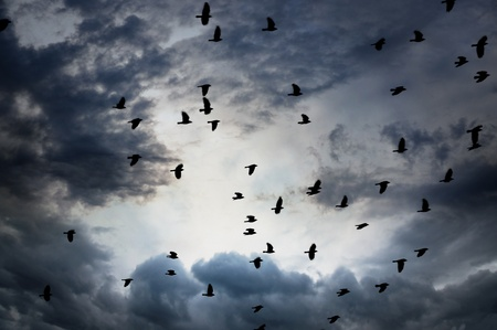 flock of jackdaws on gray and blue moody sky Stock Photo - 18870363