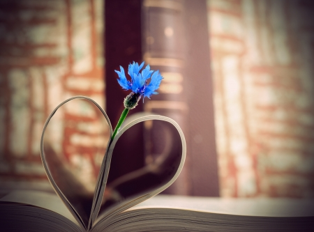 cornflower: Blue cornflower and book pages forming a heart or leaves