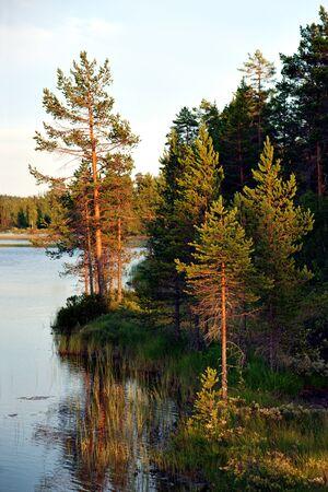 scandinavian landscape: pine trees by river at sunset in scandinavian landscape Stock Photo