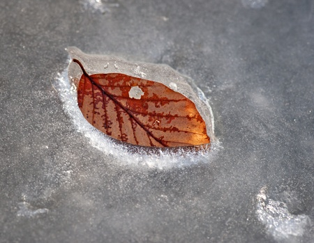 baclground: leaf of beech tree in melting ice Stock Photo