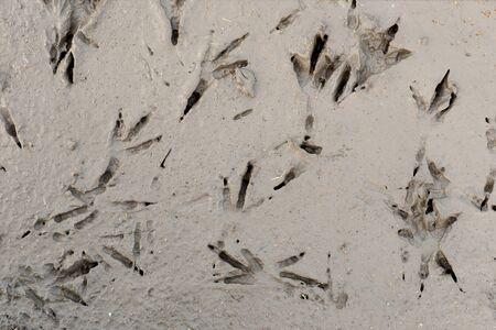 vogelspuren: Spuren von Vögeln Füße in semi trockenem Ton Lizenzfreie Bilder