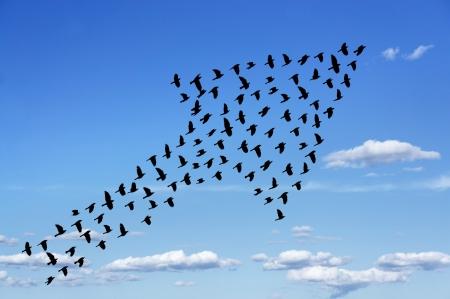 bandada pajaros: bandada de pájaros formando flecha en el cielo azul