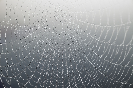 close up of cobweb with morning dew on gray background photo