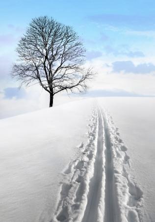 nordic ski: Nordic ski track in  field with single bare tree