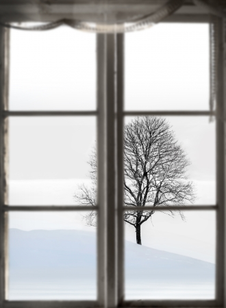 sparse: bare tree in sparse winter landscape, viewed through old window Stock Photo