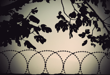 silhouette of barbed wire with tree in background photo