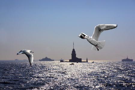 bosporus: Seagulls over Bosporus in Istanbul with Maiden