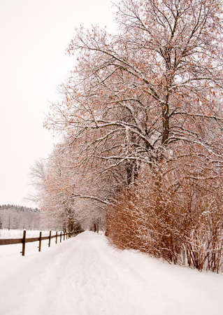 tilo: Avenida con tilos y cerca de madera en invierno Foto de archivo