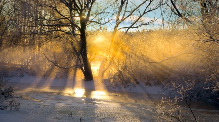 sweden winter: beautiful dawn in mid winter sweden, with sunbeams filtered through bare tree Stock Photo