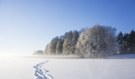 Frozen lake with shoe prints in clean snow and trees with rime frost photo
