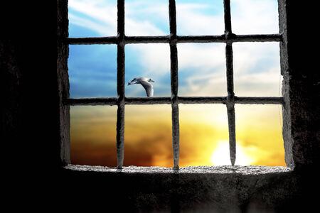 rejas de hierro: Amanecer con vuelo de la gaviota visto a través de ventana de la prisión con barras de metal Foto de archivo
