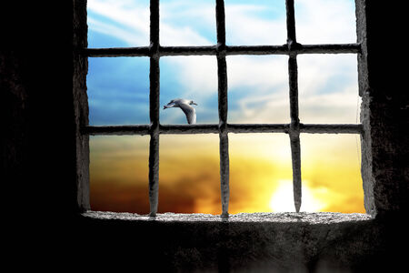 jailhouse: Dawn with flying seagull seen through prison window with metal bars
