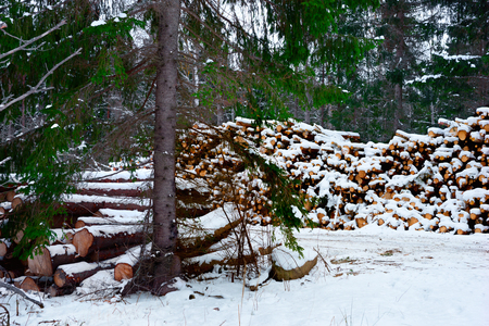 Piles of timber by Swedish dirt road covered in snow  photo