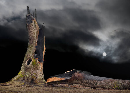Ancient oak tree hit by lightning on dark sky with full moon photo
