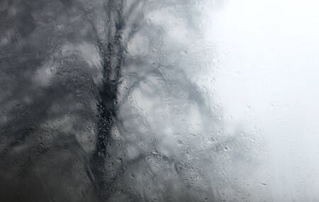 bare tree: abstract photo with bare tree seen through wet glass Stock Photo
