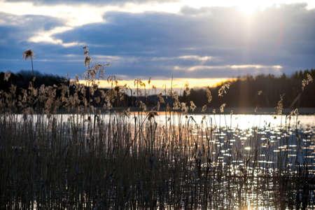 canne: Ance dal bel lago svedese al tramonto