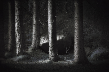 Spooky forest with conifers and big boulder