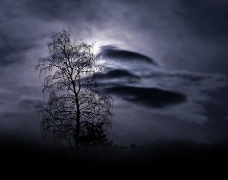 moonshine: Bare tree on dark sky with moonshine