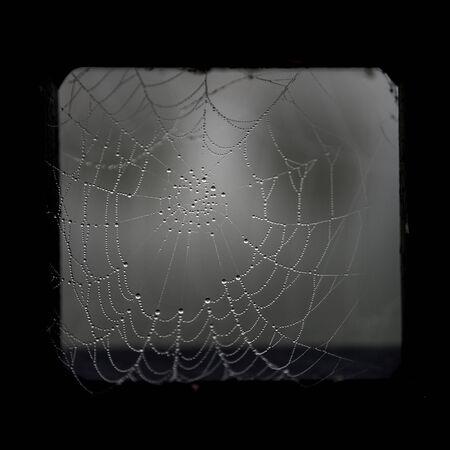 cobweb: Spooky cobweb with morning dew in black metal frame