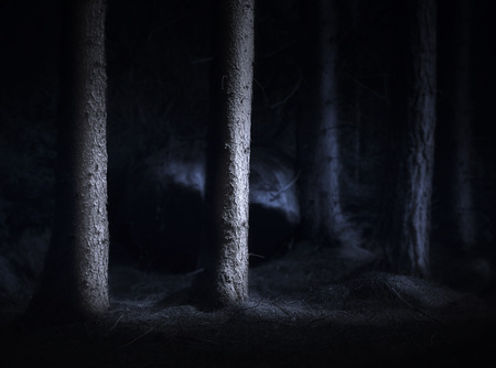 Spooky dark forest with bare tree trunks in blue light