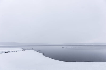 sparse: Sparse winter landscape with ducks swimming in cold water Stock Photo