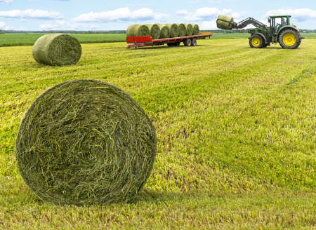 Haybales in field with tractor and trailer in background