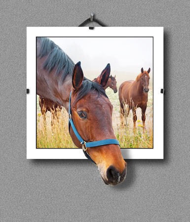 hanging out: Portrait of brown horse hanging on wall, with  3d illusion that the head is sticking out