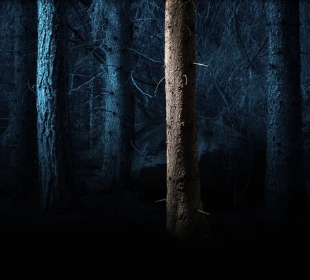 Forest with conifers in spooky evening light photo