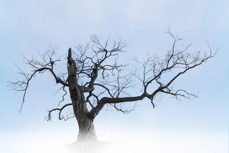 Old bare tree on blue sky