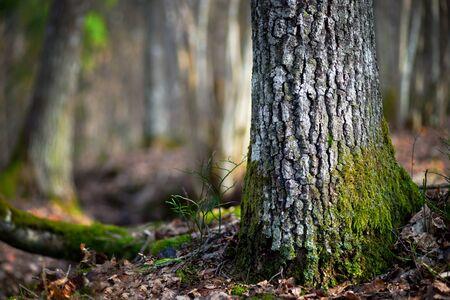 dia soleado: Primer plano de tronco de árbol de coníferas en zona de desierto en un día soleado en la primavera temprana en Escandinavia
