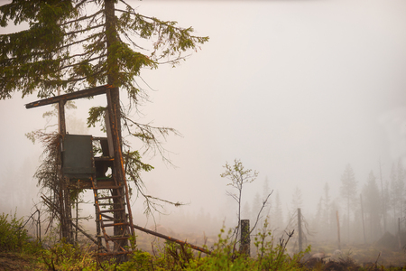 built: Shelter built for hunting moose in autumn in clearing of scandinavian forest on foggy day Stock Photo