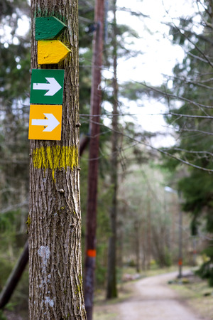 Arow signs on tree indicating jogging or walking paths of different lengths in scandinavian forest photo