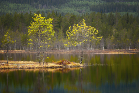 scandinavian landscape: Beautiful Scandinavian landscape with small pine trees on island in tarn reflected in the water
