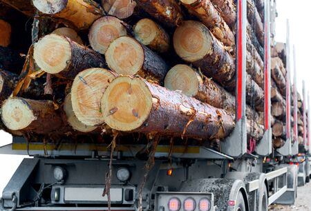 timber industry: Close up of timber on trailer of timber truck Stock Photo