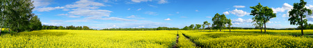 Panoramic view of rural landscape with rapeseed field