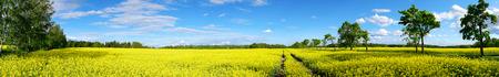 Vue panoramique du paysage rural avec le champ de colza