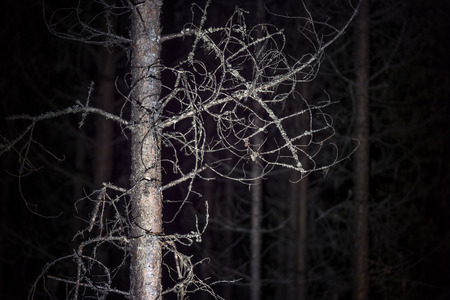 spooky tree: Spooky tree with fungus in dark forest at night Stock Photo