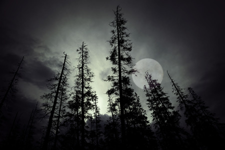 dark skies: Low angle view of spooky forest with dark sky and big full moon Stock Photo