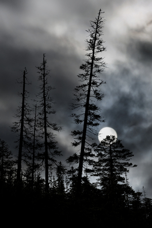 pine tree silhouette: spooky forest with silhouettes of trees, dark sky and big full moon Stock Photo