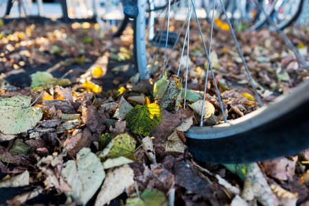 rack wheel: Close up of wheel of bike in bicycle rack with many colorful autumn leaves on ground