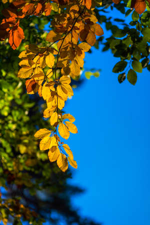 colourful sky: Colorful leaves on trees in autumn on blue sky Stock Photo