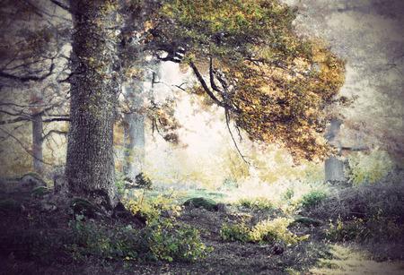 roble arbol: Roble en el hermoso paisaje en tonos sepia nostálgico
