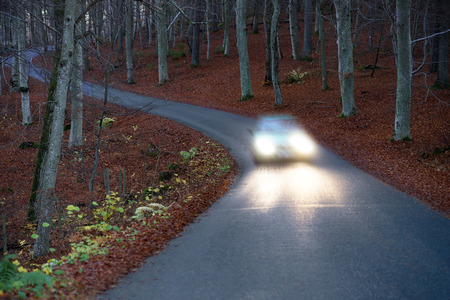 headlights: Car with headlights on narrow winding country road in beech forest at night