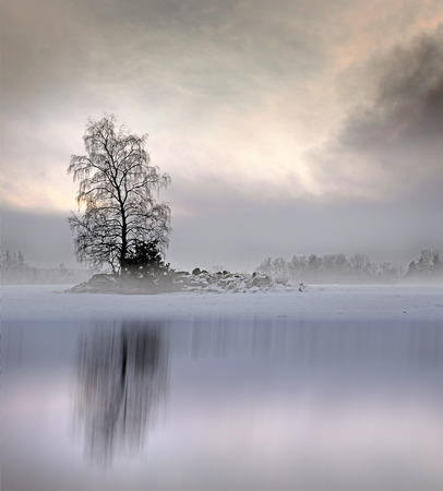 foggy: Bare tree in foggy landscape with moody sky, reflected in shiny ice of lake