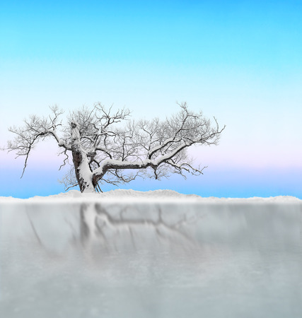 Bare tree covered in snow on crisp bright sky, reflected in clear ice Stock Photo
