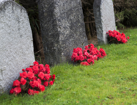granit: Red roses by tombstones in graveyard