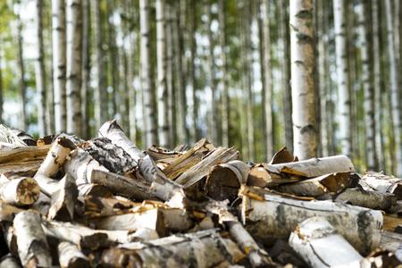 Hoop van brandhout van de berk met berken bos op de achtergrond Stockfoto