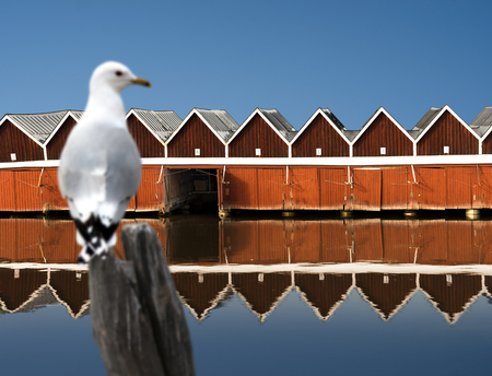boathouse: Row of traditional red wooden boat houses reflected in water, seagull in foreground