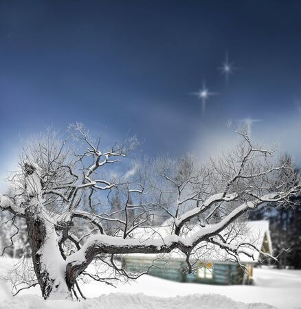 log cabin in snow: Tree covered in snow in winter evening with stars in sky and log cabin in background