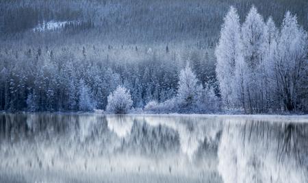 Odbicie w lodzie lasów iglastych i brzóz pokryte szronem rym